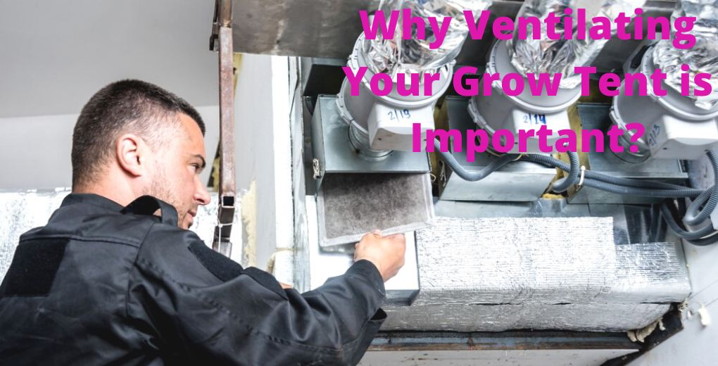 Why Ventilating your Grow Tent is Important?